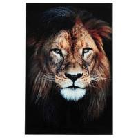 Bilde Løve