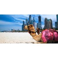 Reise til Dubai